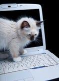 Gato do teclado Foto de Stock