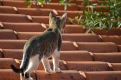 Gato do telhado fotografia de stock royalty free
