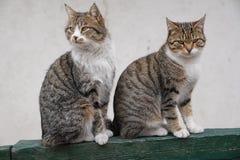Gato dois marrom bonito que senta-se de lado a lado fotografia de stock royalty free