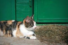 Gato doméstico imagenes de archivo