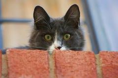 Gato doméstico Imagen de archivo