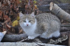 Gato doméstico 4 Imagens de Stock
