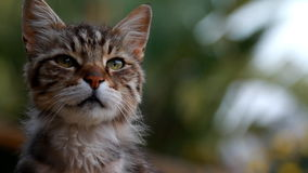 Gato doméstico filme