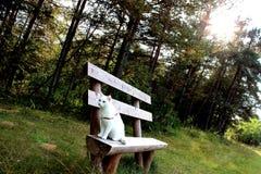 Gato doméstico blanco Imágenes de archivo libres de regalías