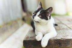 Gato doméstico bonito fotografia de stock