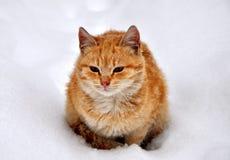 Gato doméstico bonito novo bonito na fotografia conservada em estoque da neve imagem de stock