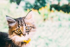 Gato doméstico brincalhão imagem de stock royalty free