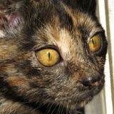 Gato doméstico colorido foto de stock royalty free