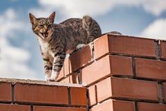 Gato doméstico na cerca imagem de stock royalty free