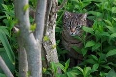 Gato doméstico no jardim Foto de Stock Royalty Free