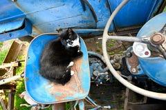 Gato doméstico que encontra-se em um trator azul fotografia de stock royalty free