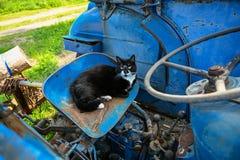 Gato doméstico que encontra-se em um trator azul fotos de stock