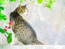 Gato doméstico que olha fixamente em algo com flores ao redor Fotos de Stock