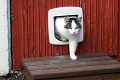 Gato doméstico usando a aleta do gato fotografia de stock