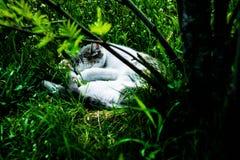Gato dormido Imagen de archivo