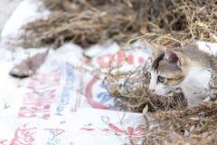 Gato dos animais de estimação que procura a caça fotografia de stock