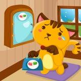 Gato dos desenhos animados ferido Fotos de Stock