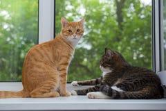 Gato dos que se sienta en el travesaño de la ventana Fotografía de archivo libre de regalías