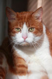 Gato dramático Fotografía de archivo