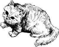 Gato drenado mano Imagen de archivo libre de regalías