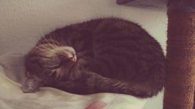 Gato dulce Fotos de archivo libres de regalías