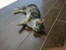 Gato dulce Imagen de archivo