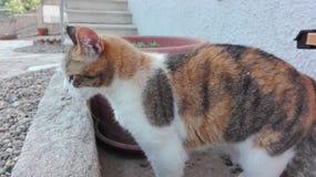 Gato dulce Imagenes de archivo
