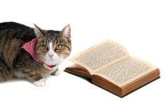 Gato dulce con el bandana que lee un libro Foto de archivo