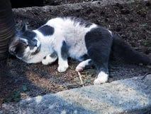 Gato dulce en el cementerio fotografía de archivo libre de regalías