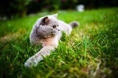 Gato dulce en hierba verde foto de archivo