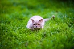 Gato dulce en hierba verde foto de archivo libre de regalías
