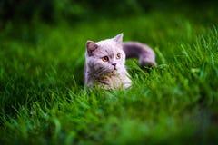 Gato dulce en hierba verde imagen de archivo