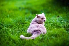 Gato dulce en hierba verde imagen de archivo libre de regalías
