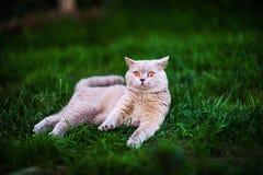 Gato dulce en hierba verde fotos de archivo