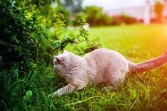 Gato dulce en hierba verde fotos de archivo libres de regalías
