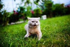 Gato dulce en hierba verde imágenes de archivo libres de regalías