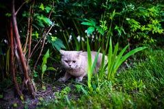 Gato dulce en hierba verde fotografía de archivo