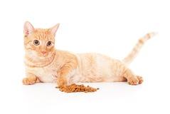 Gato e alimentação vermelhos bonitos Fotos de Stock Royalty Free