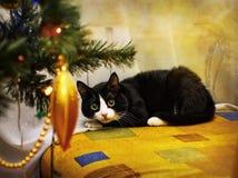 Gato e ano novo Fotografia de Stock