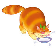 Gato e bacia de leite Imagens de Stock Royalty Free