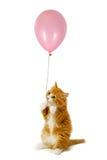 Gato e balão foto de stock royalty free