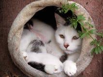 Gato e bebês da mamãe Fotografia de Stock
