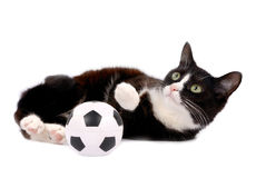 Gato e bola Foto de Stock Royalty Free