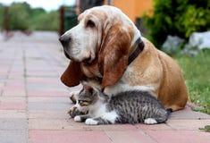 Gato e cão Imagens de Stock