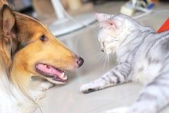 Gato e cão Imagem de Stock Royalty Free