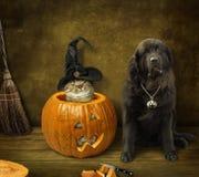 Gato e cão de Dia das Bruxas imagem de stock royalty free