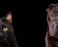 Gato e cão - metade do fim do açaime acima dos retratos Fotografia de Stock