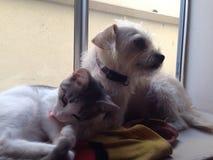 Gato e cão na soleira Imagens de Stock