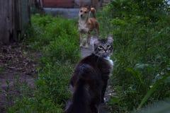 Gato e cão no trajeto Fotos de Stock Royalty Free