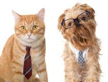 Gato e cão nos vidros Imagem de Stock Royalty Free